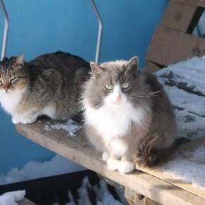 Котики Еройлы