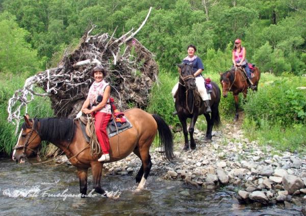 камчатка кони
